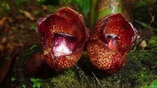 Download Bio-emprendimietos para el uso sustentable de la biodiversidad en la provincia de Napo - Ecuador Video