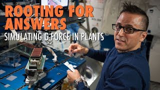 Download Rooting for Answers: Simulating G-Force in Plants Video