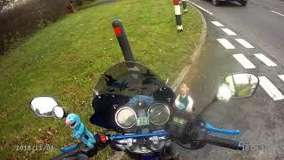Download Settle dog log vlog.... Video