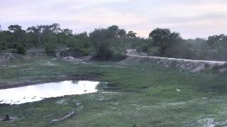 Download Djuma Private Game Reserve Live Stream Video