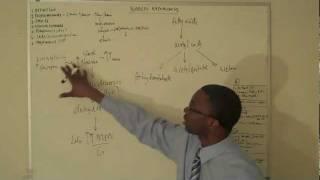 Download Diabetic ketoacidosis Lecture Part 1(DKA) Video