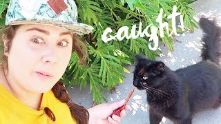 Download I Got Caught Trying To Steal A Disneyland Cat Video