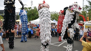 Download 2017 Lion Dance Perth Australia 西澳新年 CNY Festival Opening Parade - CCC, Chung Wah & Kong Hing Koon Video