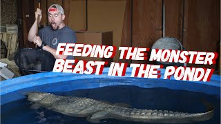 Download SECRET POND You DON't want to miss this! | Jay Wilson Video