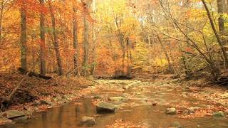 Download 3 Hours Nature Sound-Rocky Creek-Forest Sound Relaxation-Birds-Water-Soothing Sleep Sound Video