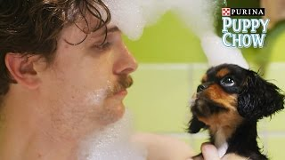 Download Puppyhood: We Met A Girl // Presented by BuzzFeed & Purina Puppy Chow Video