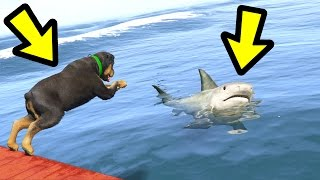 Download GTA 5 - Chop vs. Shark! (Who Survives?) Video
