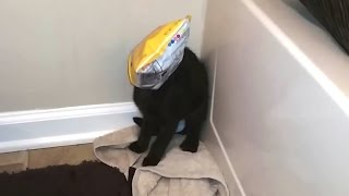 Download Cats Getting Stuck in Things Compilation Video