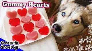 Download Valentine's Day Strawberry Gummy Dog Treats | DIY Dog Treats Recipe 93 | Homemade Dog Treats Video