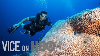 Download Scientists Are Breeding Super Coral That Can Survive Climate Change: VICE on HBO, Full Episode Video