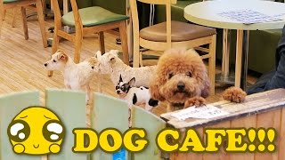 Download Bau House Dog Cafe - Seoul 2017 Video