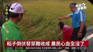 Download 連日豪雨侵襲 逾2萬隻雞活活淹死 | 華視新聞 20180704 Video