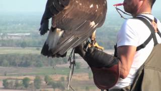 Download Golden Eagle Training, 5th Week Practicing Video