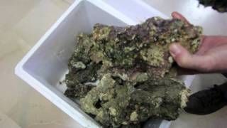 Download CÓMO MONTAR ACUARIO MARINO (Red Sea SX Max Led) Aquarium Centrofama Video