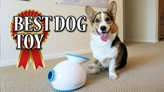 Download Corgi Learns to use iFETCH Ball Launcher - BEST DOG TOY Video