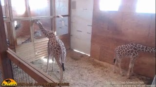 Download Animal Adventure Park Live Stream Video