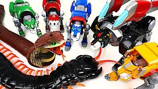 Download Giant Cobra and insect appeared! Voltron Legendary Defender! Save the Lion Guard! - DuDuPopTOY Video