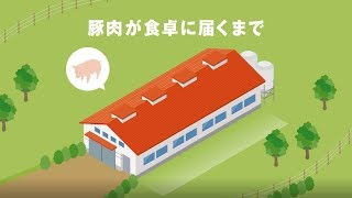 Download 豚肉が食卓に届くまで Video
