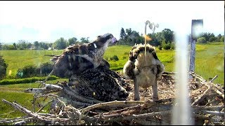 Download SPLAT! And then they laughed! Charlo Ospreys. 09.22 / 15 July 2018 Video