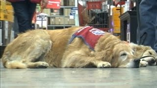 Download Lowe's hires a veteran and his service dog Video