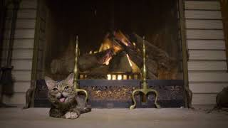 Download Lil BUB's Extraordinarily Magical Yule Log Video 2017 Video