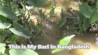 Download Bangladesh Travel, Journey To my Bari from Sylhet to Tajpur Vlog Video