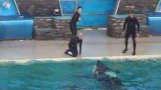 Download Shamu Show Incident Nov. 15 2006 Video