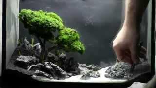 Download Bonsai Aquarium Acquario Bonsai Step by Step Video