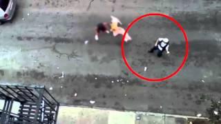 Download 인정사정 볼 것 없다! 무서운 개들의 습격 포착 Video