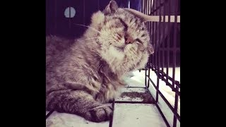 Download Street cat finds love after living most of his life as a feral Video