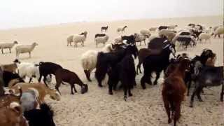 Download Abu Yusuf Wafra Farms II Video