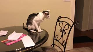 Download Teddy Tuesday Complete with Honks! Video
