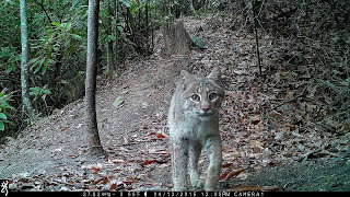 Download A montage of wildlife behind our home in Hendersonville, NC. Video