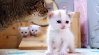 Download 小猫咪夭折后,猫妈妈的举动让人看了心碎 Video