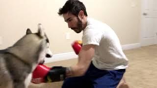 Download Teaching My Dog To Box Video