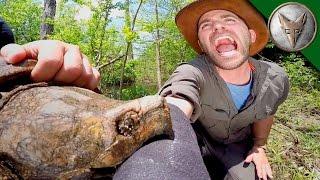 Download Brave Wilderness | CRAZY Alligator Snapping Turtle Bite! Video