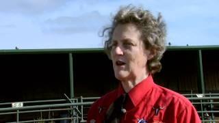 Download Animal Behavior with Temple Grandin - Part 1 Video