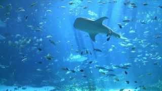 Download largest aquarium tank in the world - world's largest aquarium Video