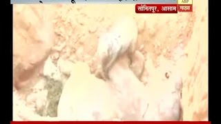 Download Assam : Baby Elephant dies in plant pit Video