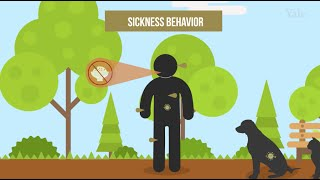 Download The Effects of Fasting on Infections Video