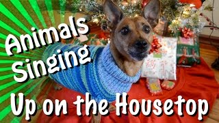 Download Animals of YouTube sing Up On The Housetop Video
