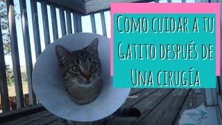 Download Como Cuidar a un Gato Después de Una Cirugia Video