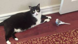 Download Bird madly in Love with Cat. Video