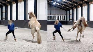 Download Hoe Moos van een draak in een braaf paard verandert | Weekvlog #92 Video