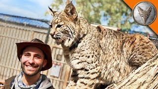 Download Bobcat needs a new home! Video