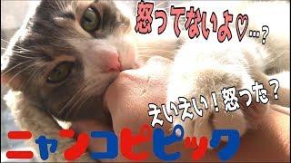 Download 猫とポプテピピックごっこしてたらとんでもないことになったwww Video
