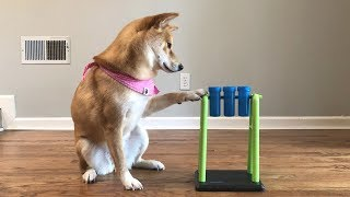 Download A Very Difficult Dog Intelligence Test. Video
