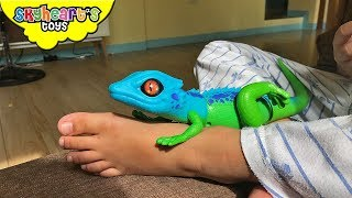 Download GECKO LIZARD inside toddler's pajama! Skyheart and Daddy got scared of lizard toys for kids Video