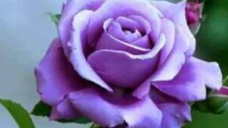 Download ″ รักจัง ″ สวัสดีวันเสาร์จร้า Video