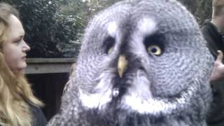 Download Marshall the dramatic Owl.....cute! Video